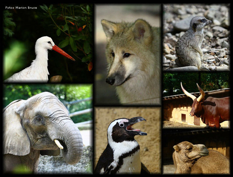 Tiere im Zoo Wuppertal - Collage (Fotos und Collage Marion Bruse)